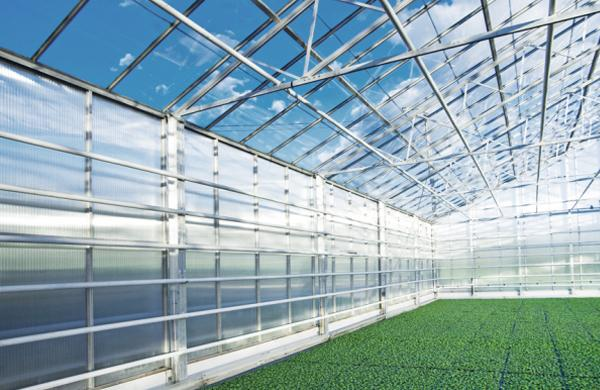 Greenhouses - fruit and vegetables grow better using geothermal energy